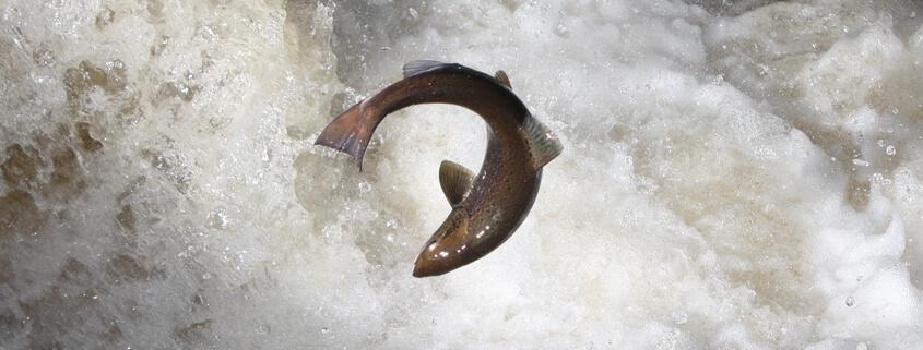 salmon-mossy